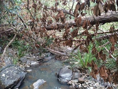 Lot 17 Jenny Lind Lane Tabulam, NSW 2469