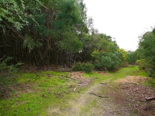 6 Albatross Court Cannons Creek , VIC, 3977